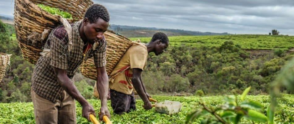 המשימה: טנזניה