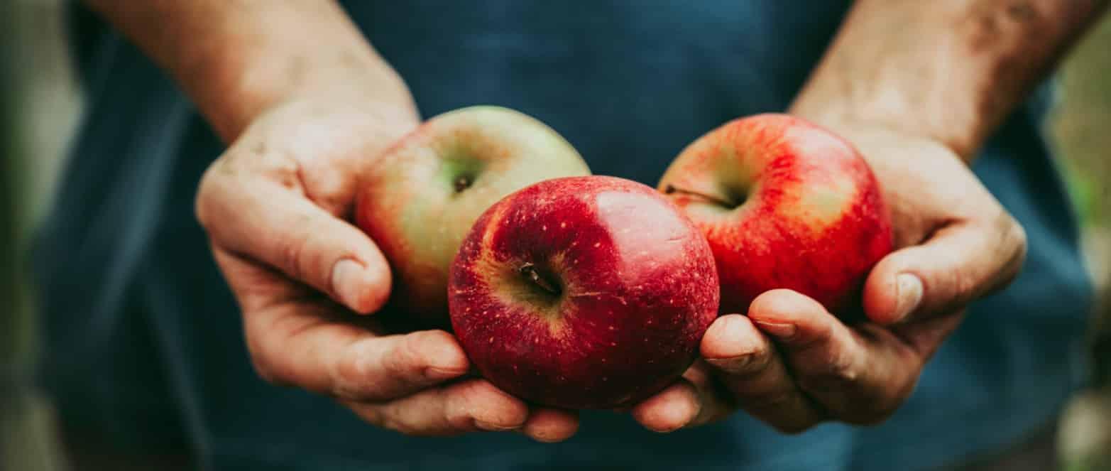 הצלחה מתוקה: המדע הופך את התפוחים לטעימים יותר