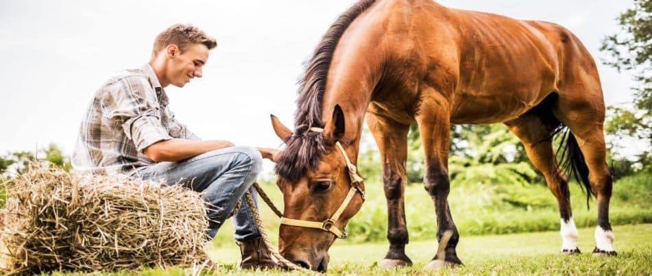 עולים על הסוס